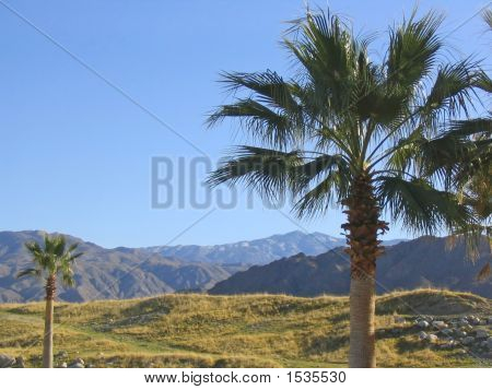 2 Palm Trees Overlooking Mountains