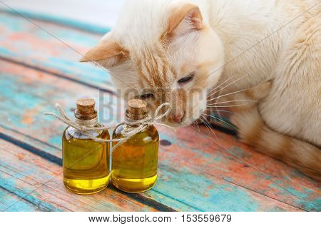 Light Red Cat And Olive Oil In Small Bottles