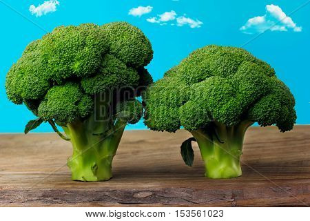 Broccolli Trees Food Art.sky With Clouds.brocolli Trees Food Artconcept Food Trees