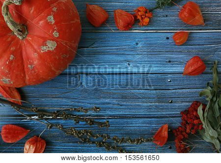 Halloween Blue Wooden Dark Background With Orange Color Pumpkins And Dry Winter Cherry. Copy Free Sp