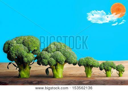 Brocolli Trees And Carrot Sun Food Art