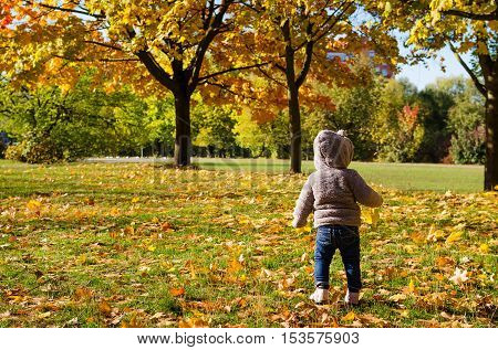 Cute little boy enjoying autumn nature. Cheerful baby boy having fun outdoors. Kid in fall forest. Child play with dry orange maple leaves. Toddler kid under a maple tree on a sunny October day.