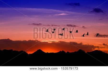 Sandhill cranes in flight at sunrise above the mountain