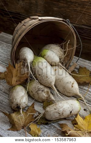 Close up of chinese radishes in basket.