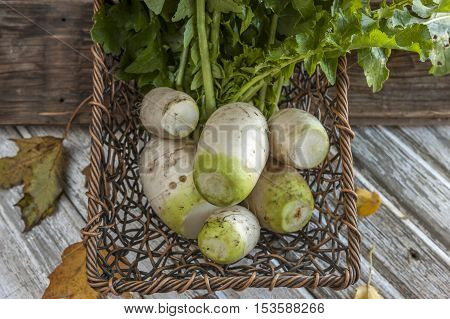Harvested Chinese radishes in a small basket.