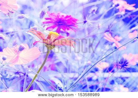 Blurred abstract background With a flower in the morning sunshine.