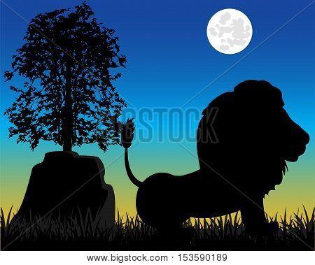 Night and silhouette animal lion on nature