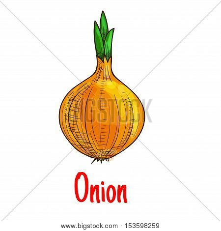 Onion vegetable isolated icon. Vector sketch emblem of fresh garden bulb onion with green growing sprouts. Isolated whole onion element with text for grocery shop emblem, farm store design