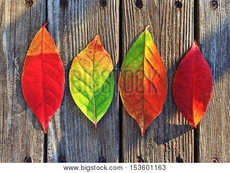 autumn leaves. colored in many colors. a fairytale landscape. autumn leaves of all colors. waiting for you to discover.