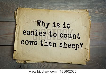 Traditional riddle. Why is it easier to count cows than sheep?