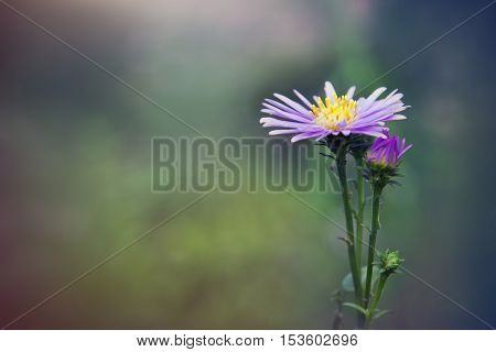 Beautiful Gerbera Daisy Flower In The Garden, Gerbera Is The Beautiful Flower For Wedding Decoration