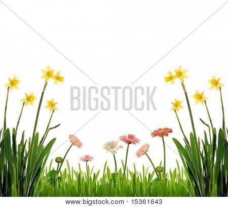 Flowers on spring meadow