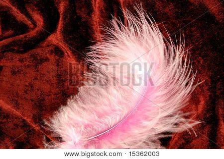 Pink tenderness - feather on velvet