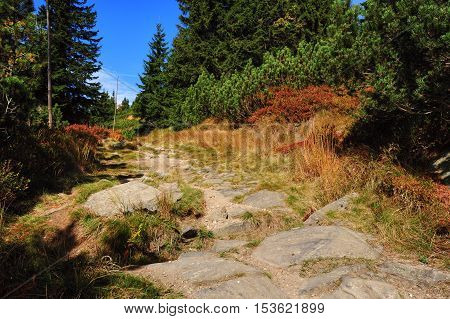 Autumn path trees and colorful landscape in Krkonose