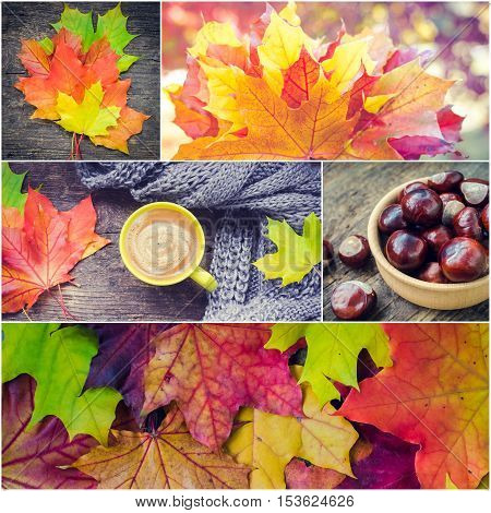 Autumn set collage from photos - Colorful and bright background with fallen autumn leaves. Warm knitted scarf and cup of coffee on rustic wooden table with colorful fall maple leaves and chestnuts.