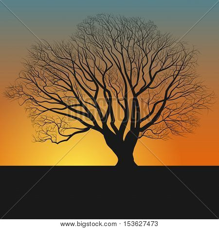 tree silhouette and nightfall, illustration eps 10