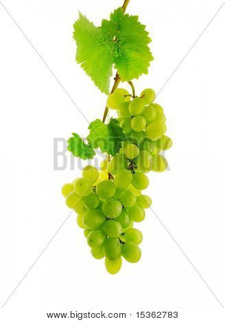 Double fresh wine grape on branch with leaves, isolated