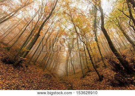 Amazing Autumn panorama with Fog in the yellow forest, Vitosha Mountain, Sofia City Region, Bulgaria