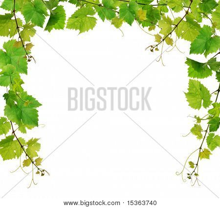 Fresh grapevine border