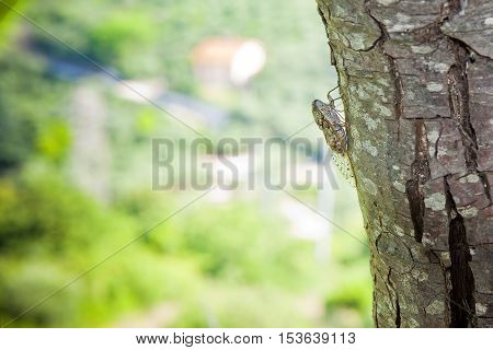Small cicada in a tree - image with copy space