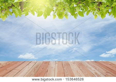 Wood floor with Green leaves frame on sky and sun light backgroundscenery for summer season background and design