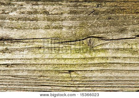 Old wood with green moss texture.