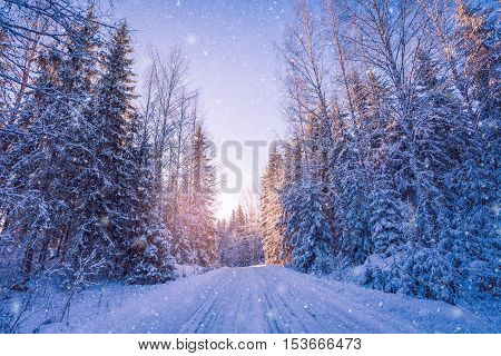 Beautiful Winter Landscape: Snowy Forest On Sunny Day