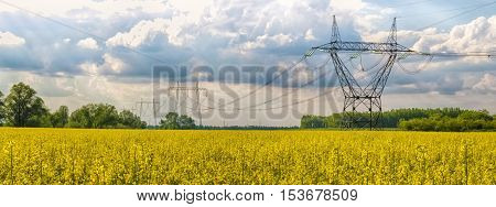 Brassica napus. Field of rapeseed in Hungary. Yellow flowers. High voltage tower in the background.