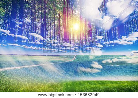 doble exposicion. Green Field and Beautiful forest