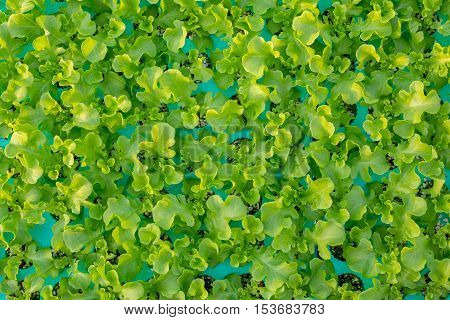 Hydroponics method of growing plants using mineral nutrient solutions in water without soi Hydroponics plant the top