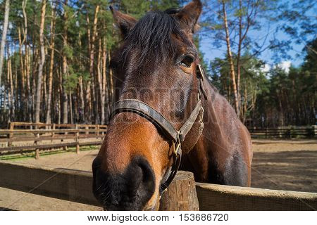 A portrait of friendly loooking horse in beautiful spring say.