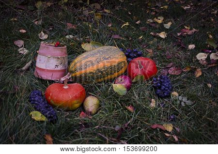 Still life with a pumpkins Autumn harvest Halloween on tha grass, falling leaves, walnuts, wild rose, grapes