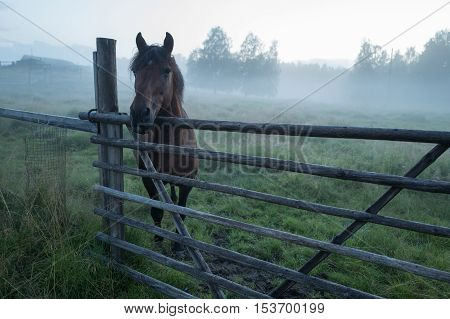 The horse is standing in foggy paddock