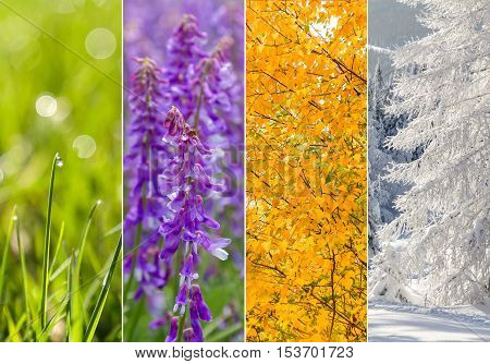 Four bright seasons - spring summer autumn winter.