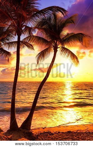 Coconut palm trees against colorful sunset,  summer background