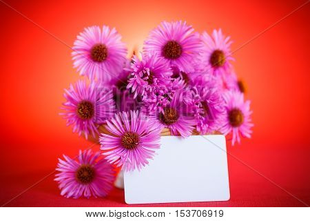 bouquet of beautiful autumn chrysanthemums on a red background
