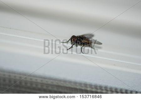 House fly on a balcony door rail