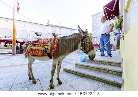 KRK TOWN, CROATIA - 22 August, 2015: A donkey at Vale Market place on island Krk Croatia the Krk Town Council Hall clock six sided well and pole with crest.