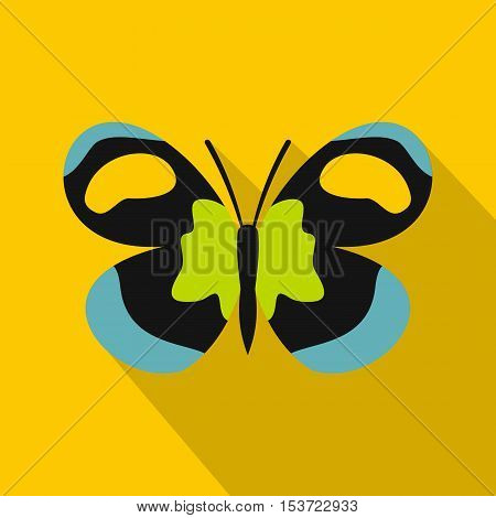 Unusual butterfly icon. Flat illustration of unusual butterfly vector icon for web