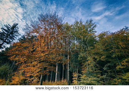 Multicolored leaves of trees. Colorful autumn and Moravian landscape Zdarna.