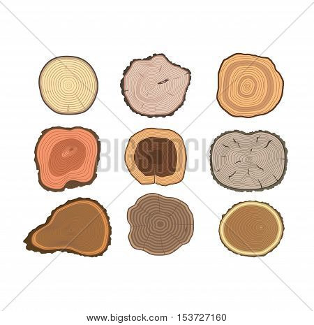 Wood slice texture wooden circle cut tree material. Set of tree slices wood trunk section natural timber. Slice of tree trunk. Aging round tree slices lumber pattern ring isolated bark.