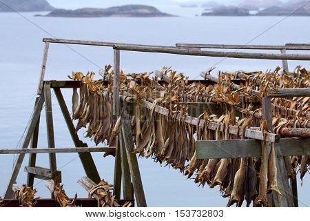 Cod stockfish.Industrial fishing in Norway.Traditional crafts of fishing in Northern Europe.