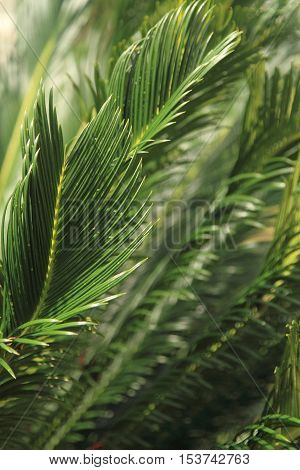Leaves of tree, nature background, tropical forest
