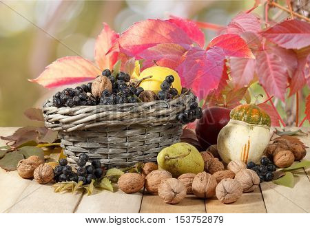 Autumn gifts: walnuts aronia apples pear pumpkin on wooden table and in a wicker basket on red wild grapes leaves background. Ladybugs climb berries
