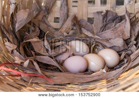 Still life eggs in the nest. Close up picture of eggs in the dried leave nest