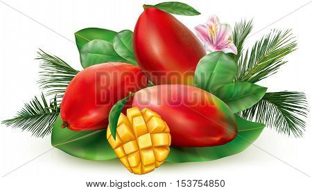 Red mango fruits and cut pulp on a leaves background. Vector