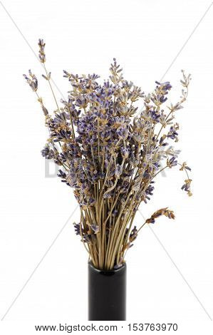 Scented lavender bunch in a black vase, isolated on white background