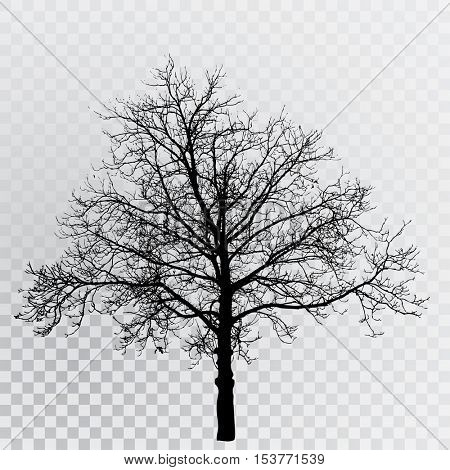 vector drawing of the transparent silhouette naked winter tree