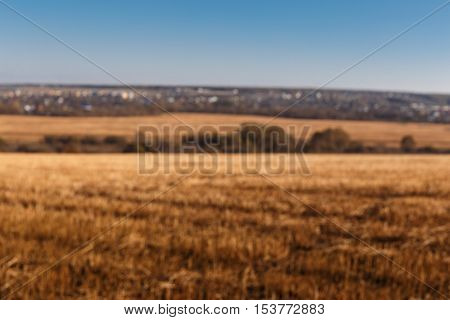 The Sloping Yellow Feld of Wheat. Blurred Abstract image. Agriculture Concept