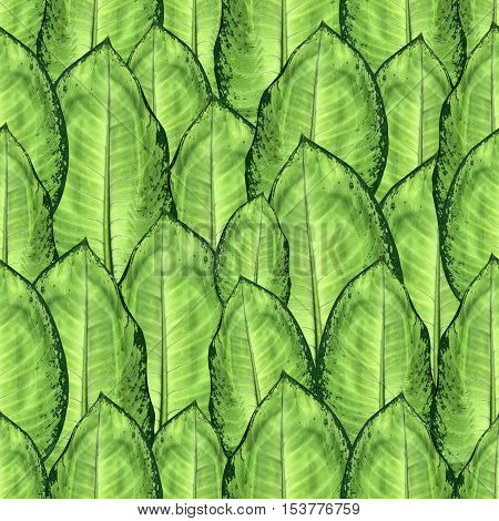 Seamless texture of leaves of fresh green dieffenbachia with dark edges and veins. Plant pattern